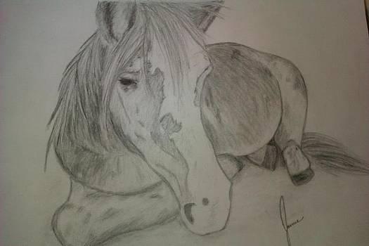 Pony by Jamie Mah