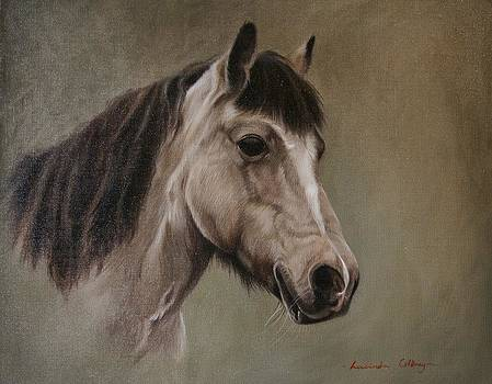 Pony by Lucinda Coldrey
