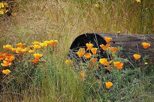 Poppies 1 2012 by Kay Reamensnyder