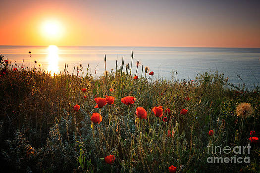 Poppies in the sunrise by Ionut Hrenciuc