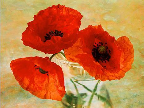 Poppies by Sandra Pledger
