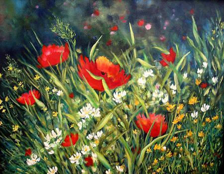 Poppy Field by Alexandra Kopp