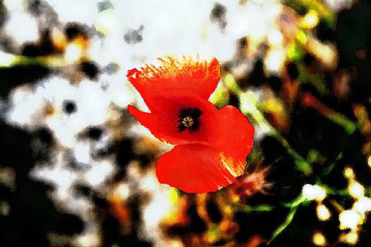Kantilal Patel - Poppy Foliage Frosted