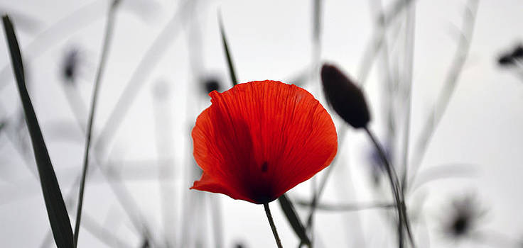 Thomas Christoph - Poppy
