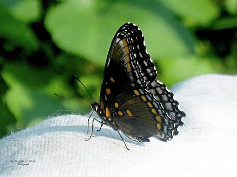 Darlene Bell - Portrait Of A Butterfly