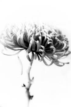 Hakon Soreide - Portrait of a Flower 2