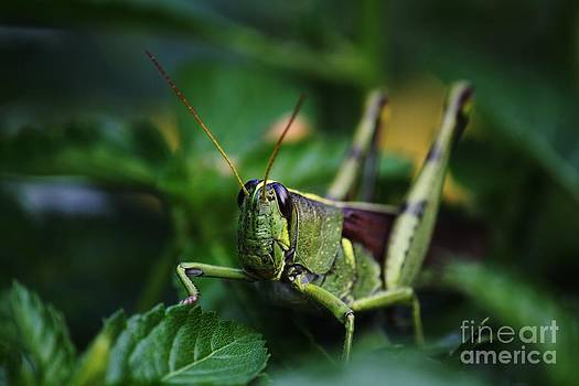 Portrait of a Grasshopper by Theresa Willingham