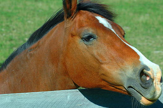 Ronald T Williams - Portrait Of A Horse