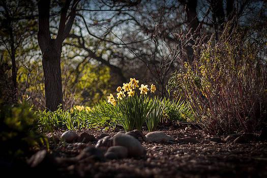 Chris Fullmer - Portrait of Daffodils