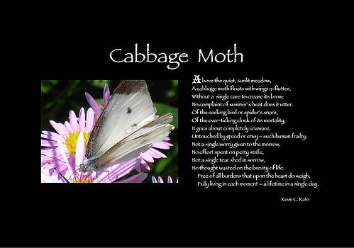 Poster Poem - Cabbage Moth by Poetic Expressions