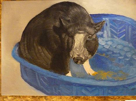 Potbellied Pig Pet Portrait Original Oil on Canvas U Provide The Picture or Idea Made to Order 5 x 7 by Shannon Ivins
