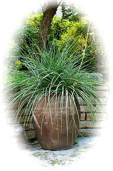Potted Grass Plant by Kathy Lewis
