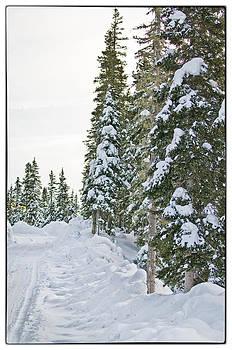 Powdery Snow Path by Lisa  Spencer