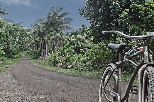 Power house road kauai hawaii by Lannie Boesiger