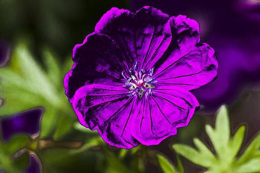 Powered Flower  by Steve Buckenberger