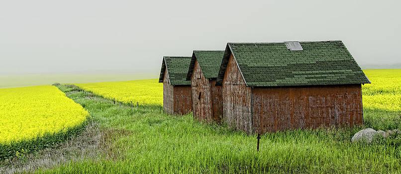 Prairie Colours by Steve  Milner