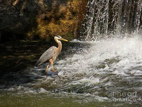 Prancing Heron by Joyce Kimble Smith