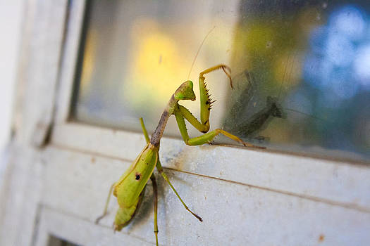 Praying Mantis by Stephani JeauxDeVine