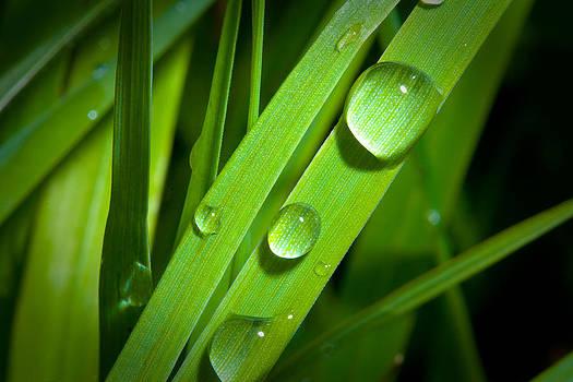 Precious Drops by Kevin Kratka