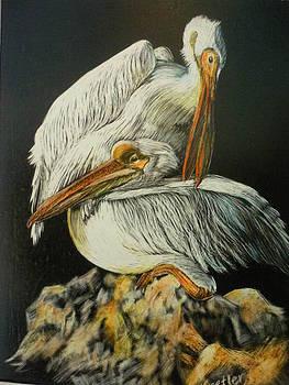 Preening Pelicans by Pauline  Kretler