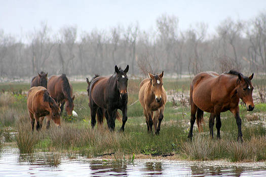 Deborah Hall Barry - Pregnant Mare and Herd