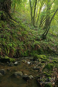 Prehistoric Rain Forest by Matt Tilghman