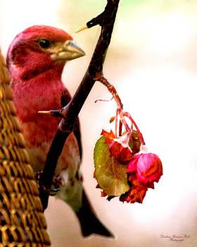 Darlene Bell - Pretty Bird
