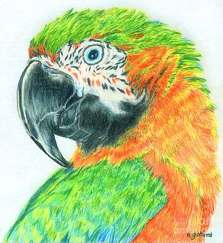 Pretty Bird by Norma Gafford