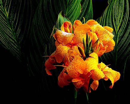 Milena Ilieva - Pretty Flower