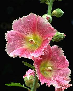 Anne Ferguson - Pretty in Pink