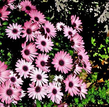 Frank SantAgata - Pretty in Pink