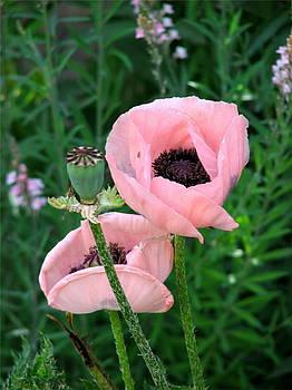Pretty in Pink by Lani PVG   Richmond