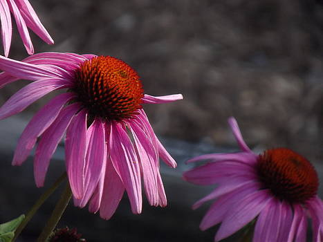 Pretty in Pink by Mamie Thornbrue