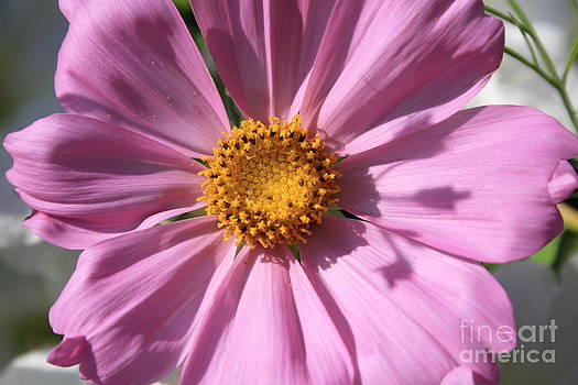 Pretty In Pink by Patricia Molison