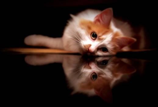 Pretty Kitty by Alissa Dasta Coletta