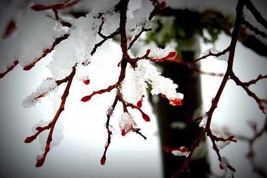 Rachael Shaw - Pretty Snow Buds