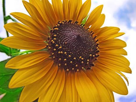 Pretty Sunflower by Mamie Thornbrue