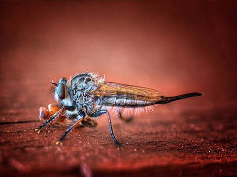 Prey of a Robber Fly by Jenny Ellen Photography