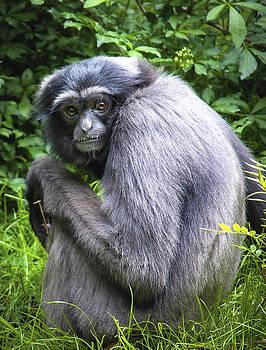 Primate by Jen Morrison