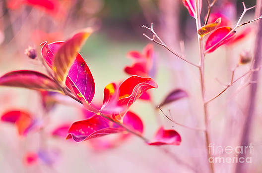 Princess Leaves by Reflections by Brynne Photography