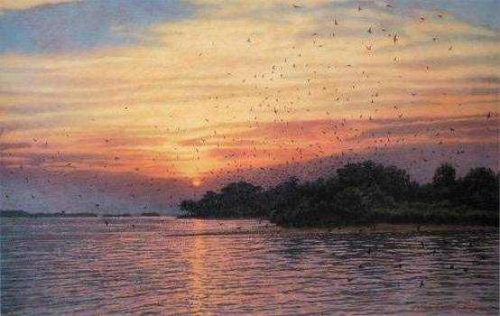 PRINT Purple Martin Sanctuary by Michael Story