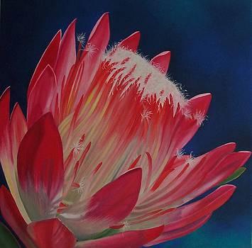 Protea Repens by Pera  Schillings