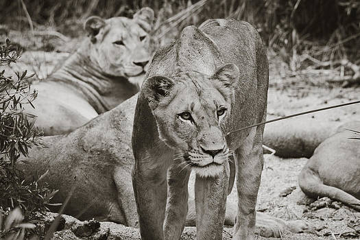 Protective Mother by Lisa Travels