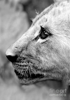 Proud Profile by Serena Bowles