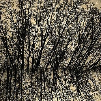 Chris Berry - pseudo reflection