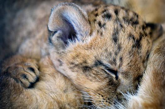 Zoran Buletic - Pssst Little King Sleep