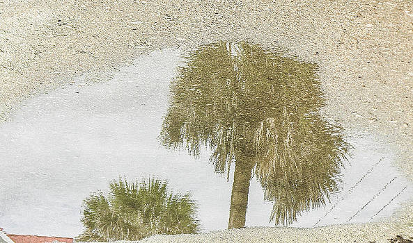 Christy Usilton - Puddle Palms