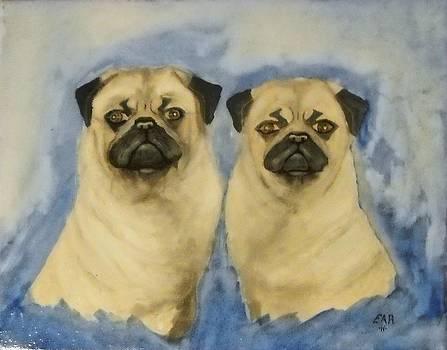 Pugs by Edwin Alverio