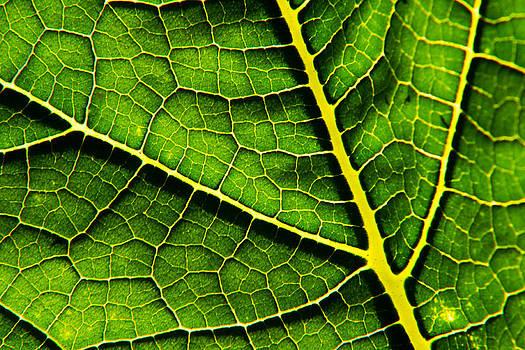 Matt Dobson - Pumpkin Leaf Abstract 2