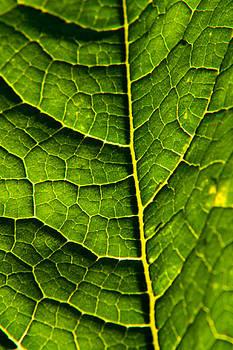 Matt Dobson - Pumpkin Leaf Abstract 3